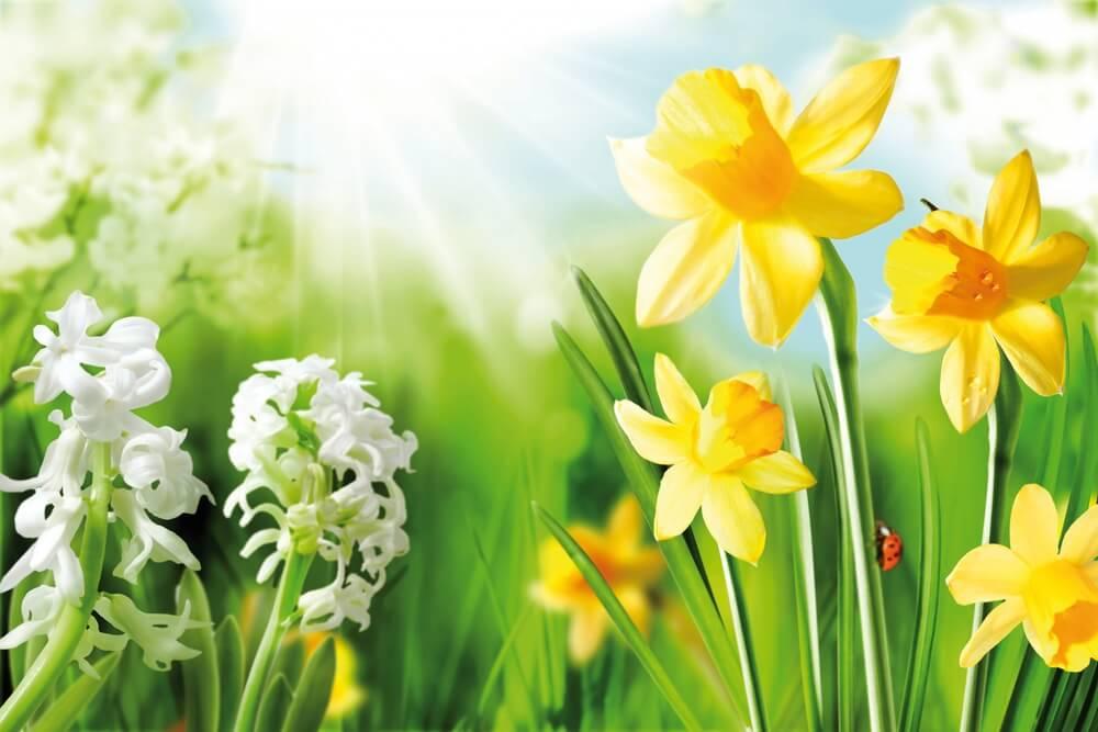 Win een heerlijke lente gezichtsbehandeling!